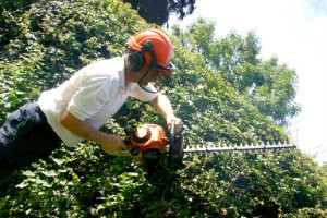 Hedge Trimming Holloway
